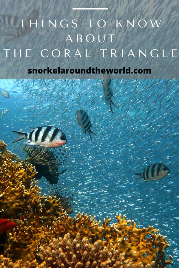 Things to know about the coral triangle