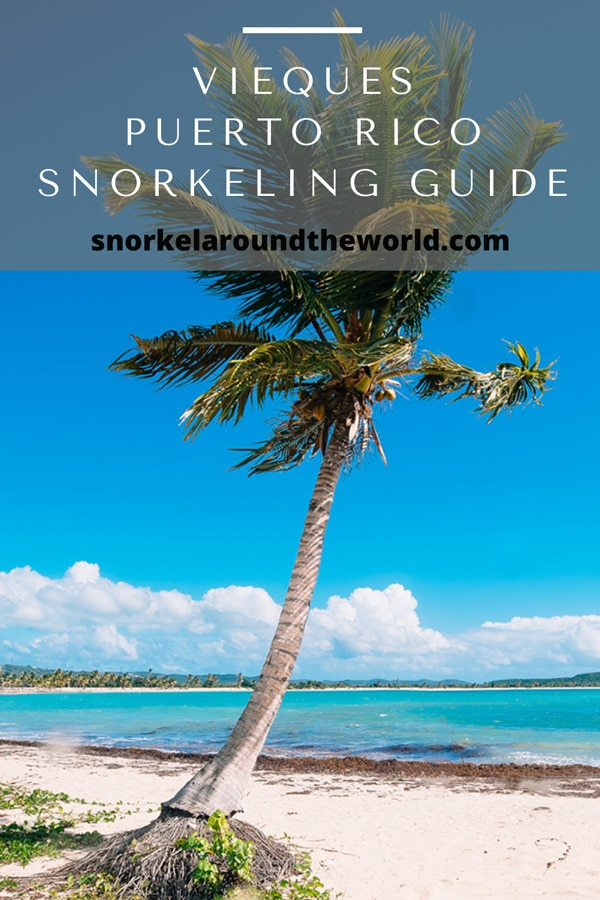 Vieques snorkeling spots guide
