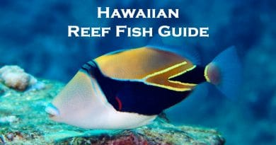 Hawaiian Fish Names And Pictures