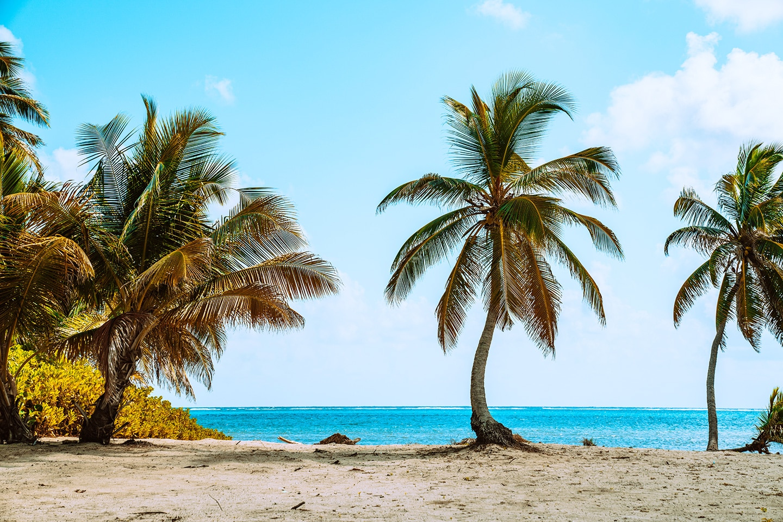 Palm trees along the sandy shoreline Ambergris Caye