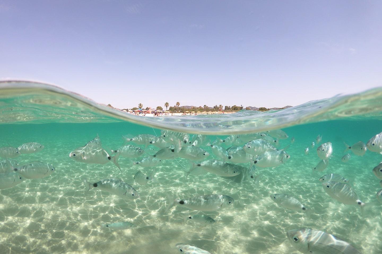 Fish seen while snorkeling in Sardinia