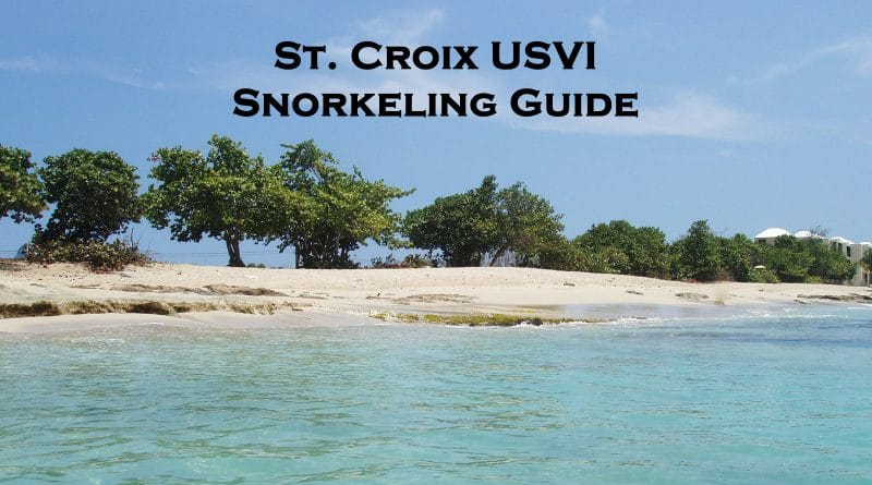 Snorkeling in St Croix