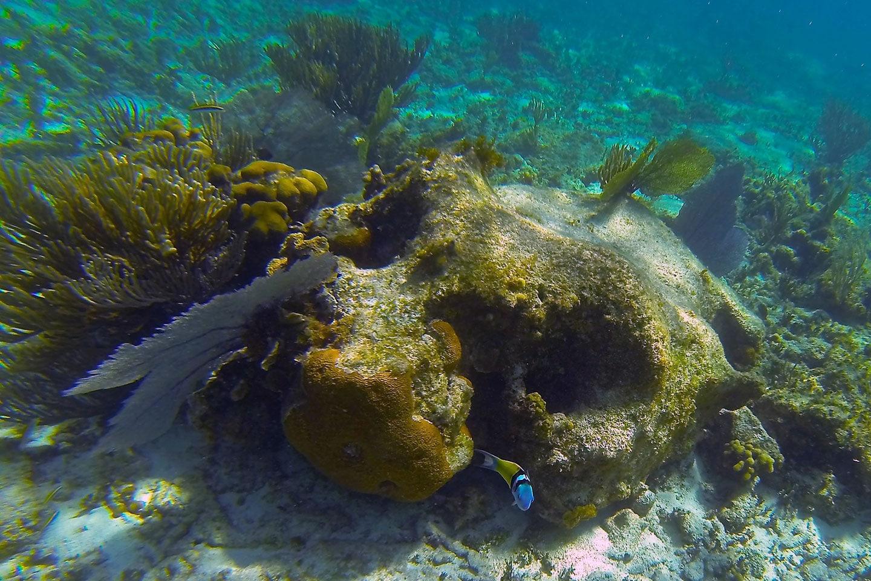 Shoal bay Anguilla Coral Reef