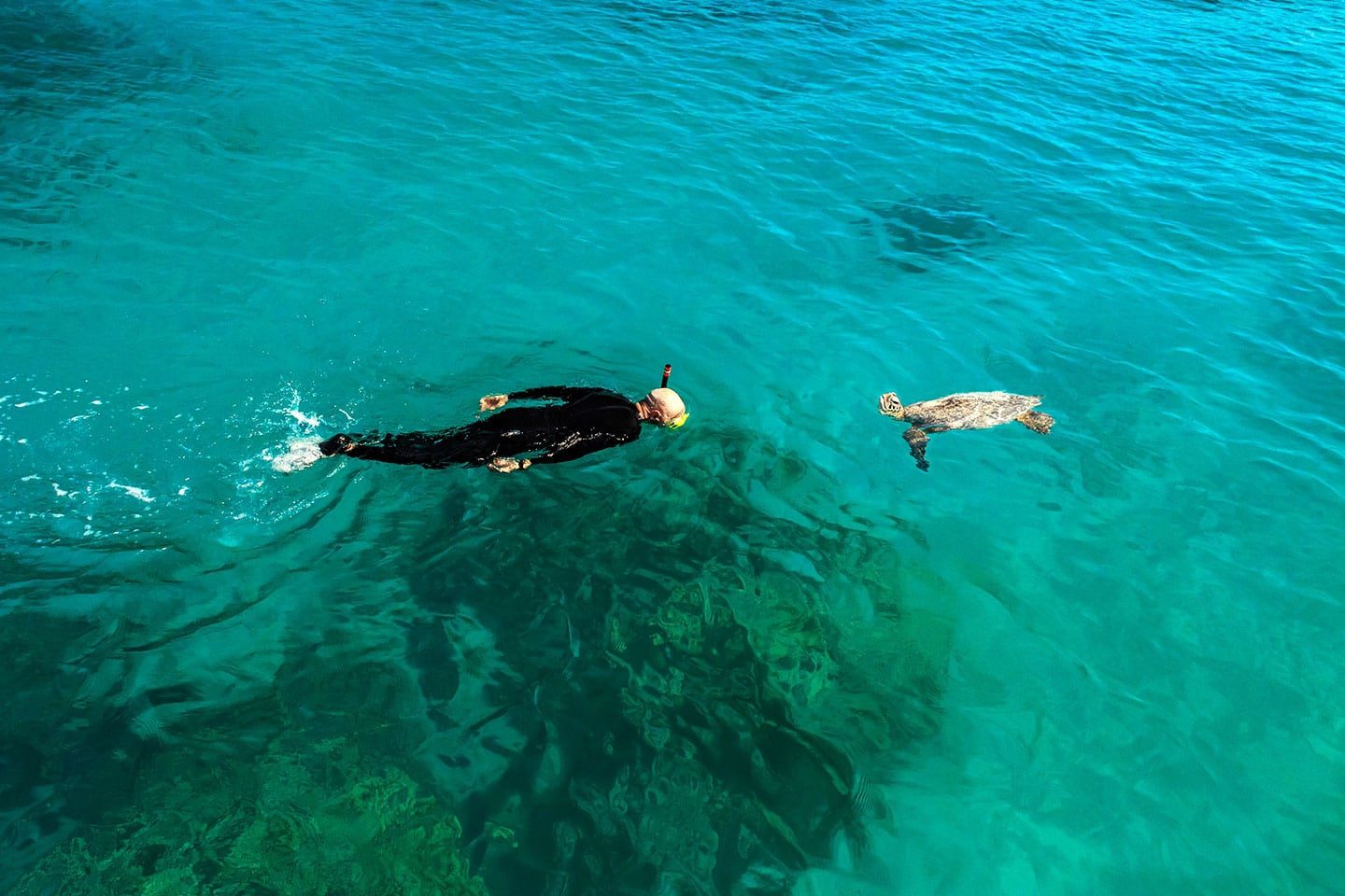 Snorkeler and a turtle - Hawaii